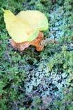 Primo giorno dell'autunno e del primo gelo Fotografia Stock
