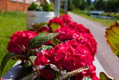In primo luogo fioritura dei fiori di estate immagini stock libere da diritti