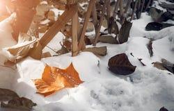 In primo luogo nevicando Fotografie Stock Libere da Diritti