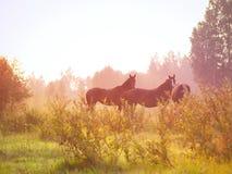 Primo mattino Fotografie Stock
