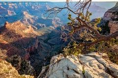 Primo mattino alla traccia luminosa di angelo in Grand Canyon Immagine Stock Libera da Diritti