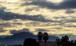 Primo mattino in Arizona Una siluetta di una palma dell'albero con le ombre nebbiose Arizona, U.S.A. fotografia stock
