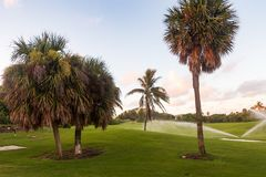 Primo mattino che innaffia sul campo da golf in Florida fotografie stock libere da diritti
