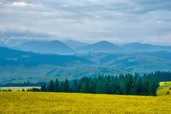 Primo mattino del paesaggio della montagna carpatica nel giorno di estate Fotografie Stock Libere da Diritti