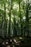 Primo mattino in foresta Fotografia Stock Libera da Diritti