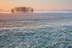 Primo mattino gelido sopra un prato nebbioso con il gruppo solo di alberi Immagine Stock Libera da Diritti