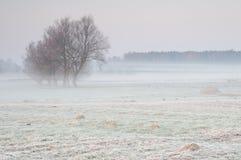 Primo mattino gelido sopra un prato nebbioso con il gruppo solo di alberi Immagini Stock Libere da Diritti