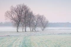 Primo mattino gelido sopra un prato nebbioso con il gruppo solo di alberi Immagine Stock