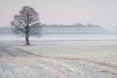Primo mattino gelido sopra un prato nebbioso con l'albero solo Fotografie Stock