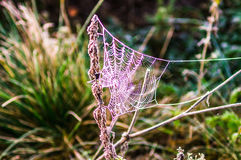 Primo mattino nella foresta la ragnatela è coperta di gelo B Fotografia Stock