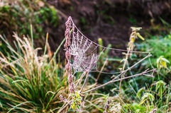 Primo mattino nella foresta la ragnatela è coperta di gelo B Fotografie Stock