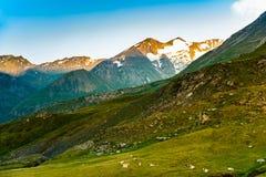 Primo mattino nelle alpi, in cui le mucche ancora stanno riposando nei prati Fotografie Stock