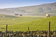 Primo mattino nelle vallate del Yorkshire Fotografia Stock