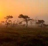 Primo mattino in palude nebbiosa Immagini Stock Libere da Diritti