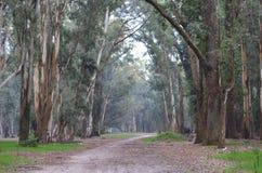 Primo mattino a Roosevelt Park immagine stock libera da diritti