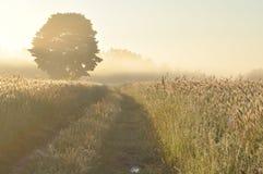 Primo mattino sul campo Fotografie Stock