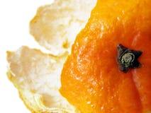 Primo piano ad un guscio arancione Immagine Stock Libera da Diritti