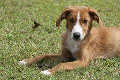 Primo piano adorabile del cucciolo in erba verde immagini stock libere da diritti