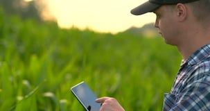 Primo piano: agronomo dell'ingegnere delle mani con un computer della compressa ispezionare le piante nei campi su un'azienda agr stock footage