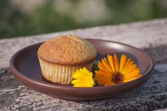 Primo piano al sole del muffin e del fiore del tagete Immagini Stock