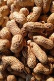 Primo piano alle arachidi in sole Immagine Stock