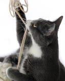 Primo piano allegro del gattino Fotografia Stock Libera da Diritti