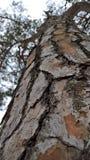 Primo piano alto dell'albero immagini stock