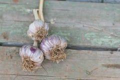Primo piano appena di aglio fresco raccolto Immagini Stock Libere da Diritti