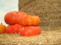 Primo piano arancio delle zucche Immagini Stock
