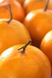 Primo piano arancione Fotografie Stock Libere da Diritti