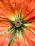 Primo piano arancione della zucca Fotografie Stock