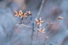 Primo piano artistico: Germogli gialli sui rami di un albero su un fondo blu Struttura artisticamente vaga fotografie stock