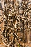 Primo piano asciutto del fondo del ramo di albero. Verticale. Fotografia Stock
