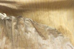 Primo piano asciutto della struttura della foglia della banana Immagine Stock