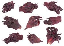 Primo piano asciutto rosso dell'insieme di tè dell'ibisco Fotografie Stock