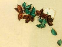 Primo piano asciutto variopinto dei fiori immagine stock