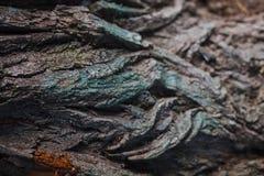 Primo piano astratto delle radici di legno variopinte immagini stock