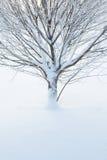 Primo piano astratto di un albero nell'inverno Fotografia Stock Libera da Diritti