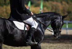 Primo piano capo del colpo di un cavallo di dressage durante l'evento della concorrenza Colore, equites immagine stock