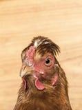 Primo piano capo del pollo Fotografie Stock Libere da Diritti