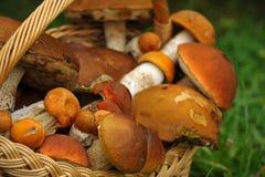 Primo piano con i funghi Immagini Stock Libere da Diritti