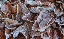 Primo piano congelato dei fogli fotografia stock