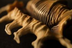 Primo piano coperto di spine tropicale della conchiglia di strombo Fotografie Stock Libere da Diritti