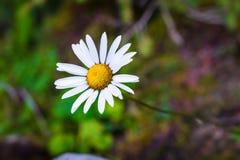 Primo piano da un bello fiore immagini stock
