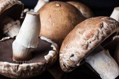 Primo piano dal lato su pochi funghi Fotografie Stock