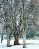 Primo piano degli alberi di inverno Fotografia Stock