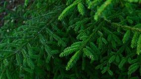 Primo piano degli alberi in foresta archivi video