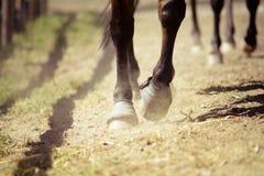 Primo piano degli zoccoli da un cavallo mentre nel trotto su una pista esterna fotografia stock