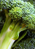 Primo piano dei broccoli Fotografie Stock