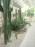Primo piano dei cactus ai giardini botanici nazionali Fotografia Stock Libera da Diritti